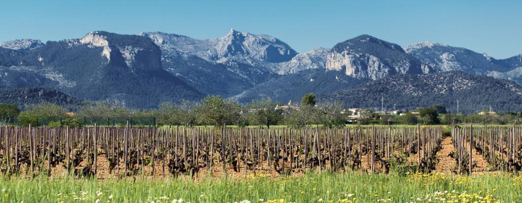 III Jornadas del grupo de viticultura de la Sociedad Española de Ciencias Hortícolas