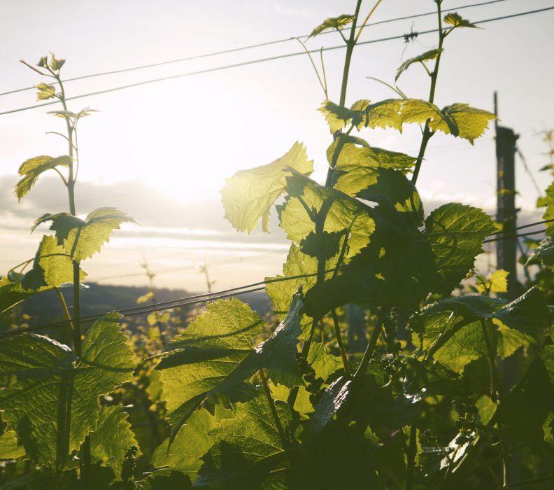Biomasa como clave para el desarrollo rural