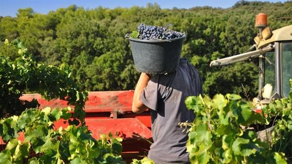 Encuesta a viticultores españoles como parte de ADVICLIM