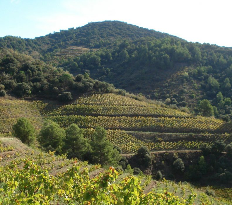 Finaliza Life Priorat + Montsant con resultados que contribuyen a hacer de Priorat una región vitivinícola más sostenible