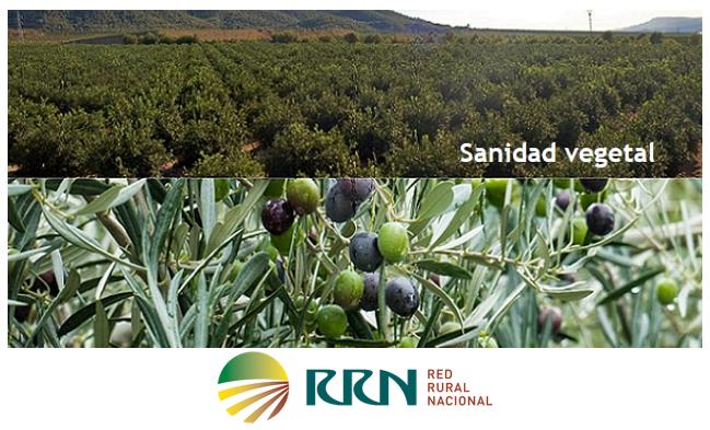 Intercambio virtual entre Grupos Operativos y Proyectos Innovadores con temática de Sanidad Vegetal Agrícola organizado por la Red Rural Nacional