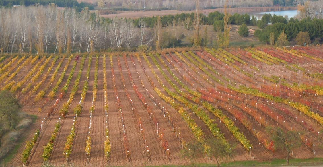 Investigadores, profesionales vitivinícolas y la Administración se dan cita para debatir acerca del estado actual y las perspectivas de los recursos genéticos vitícolas en España