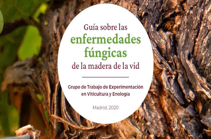 Guía sobre las enfermedades fúngicas de la madera de la vid